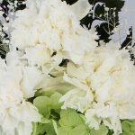 仏花によく使われている花〜カーネーション〜
